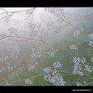 Statische raamfolie Nature 67,5cmx1,5m
